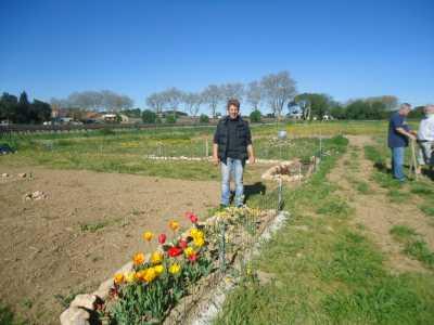 les jardins familiaux ---- Patricia THIEVIN devant ses tulipes