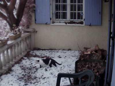 Pinet sous la neige  16 Janvier 2013