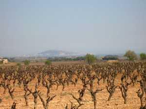 Les vignes autour du village avec vue sur la colline de SETE au loin