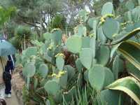visite d'un Jardin botanique fabuleux