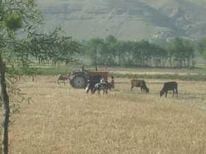 Afghanistan Juillet 2010