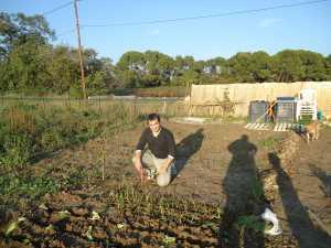 Steeve BUSNEL en train de planter  des salades Octobre 2010